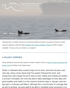 galveston bay dolphin newsletter april 2021