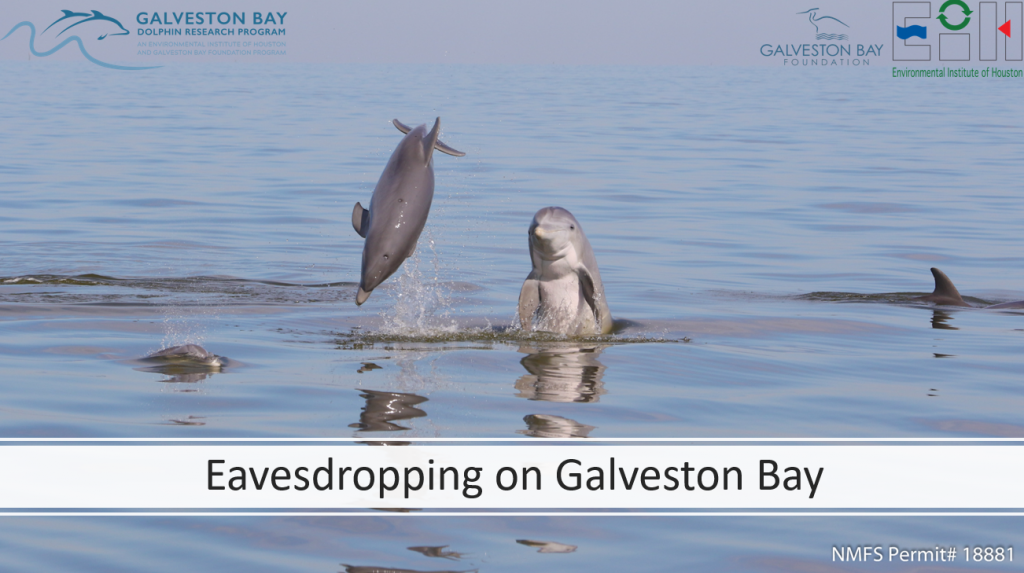 acoustic sounds of Galveston bay dolphins fish boats